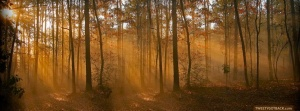 autumnsun