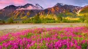 Field Of Mountain Wildflowers HD Desktop Background